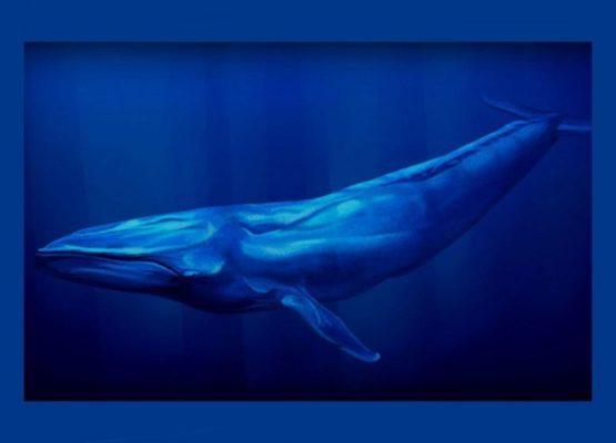 Lordello: Jogo da Baleia Azul, como evitar o suicídio dos jovens