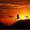 Renata Sartório: Corumbá, a capital do Pantanal
