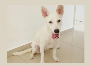 Silene Silva – Pet: O resgate de uma vida