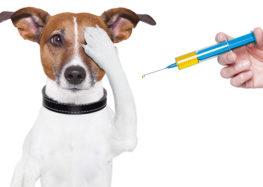 Silene Silva: A importância da vacinação em cães e gatos