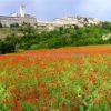 Ro Andrioli: Encantos de Assisi- O coração verde da Itália