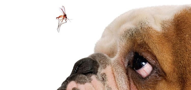 Silene Silva – Pet: Vacine contra leishmaniose visceral canina