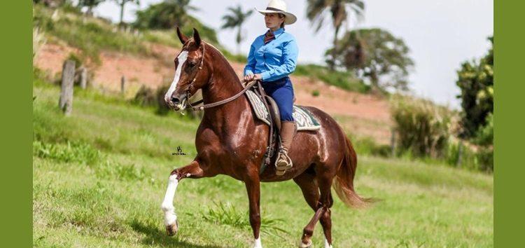 Flávia Raucci: O empoderamento feminino no mercado de cavalos