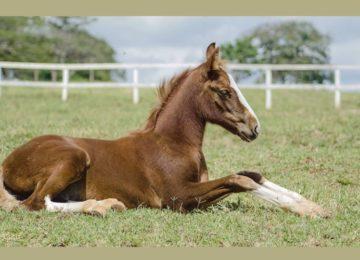 Flávia Raucci: Comprando meu primeiro cavalo