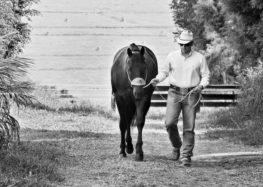 Flávia Raucci: Cavalo, paixão e poesia