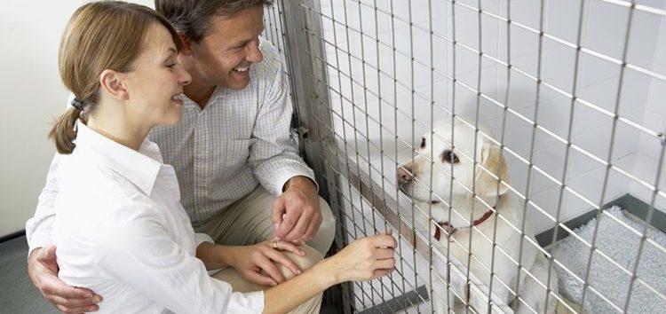 Rodrigo Donati: Decidi ter um pet. E agora?