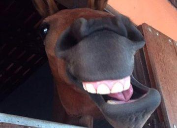 Flávia Raucci: Cavalo sente dor de dente?