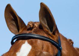 Raucci:Quando um cavalo fala, outro não abaixa a orelha