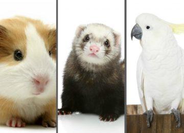 Rodrigo Donati: Pets não convencionais