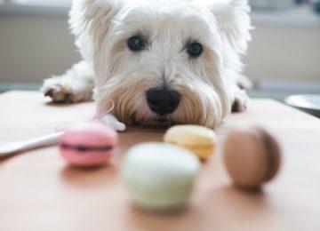Donati: Plantas e alimentos tóxicos para cães e gatos