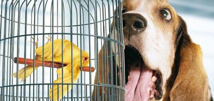 Rodrigo Donati: Saúde bucal animal