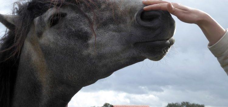 Flávia Raucci: Adoção de cavalos