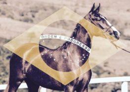 Flávia Raucci: Cavalo X Política