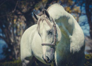 Flávia Raucci: Cavalo e simbologia