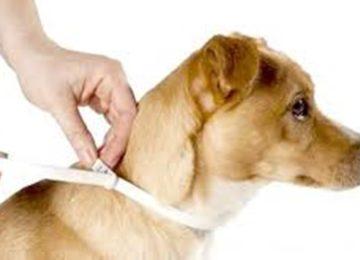 Rodrigo Donati – Leishmaniose canina: prevenção e tratamento