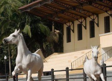 Flávia Raucci: Parque da Água Branca, um lugar mágico