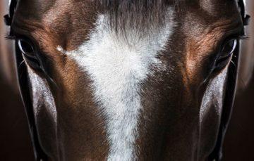 Flávia Raucci: A arte de fotografar Cavalos