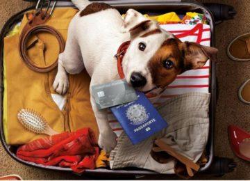 Rodrigo Donati: Como viajar com meu pet?