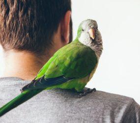 Rodrigo Donati: É macho ou fêmea, doutor?