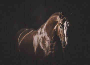 Flávia Raucci: Oração do cavalo