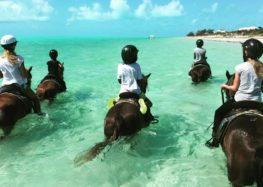 Flávia Raucci: Cavalos na areia