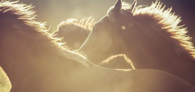Flávia Raucci: Cuidados com os cavalos no calor