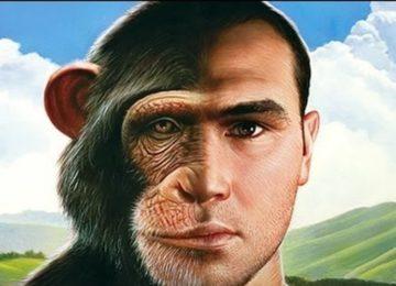 Renato Vernucio: Primata, eu?