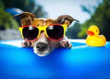 Donati: Pets e exposição ao sol, uma combinação perigosa