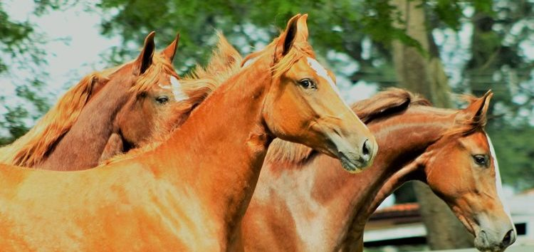 Flávia Raucci: Cavalos – Um ramo bilionário dentro do Agronegócio
