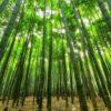 Lilian Schiavo: Um jeito nipônico de ser