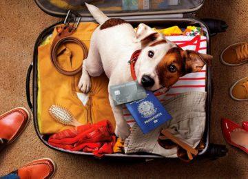 Rodrigo Donati: Como levar meu pet para o exterior