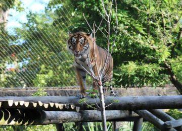 Rodrigo Donati: Zoológicos, os bastidores