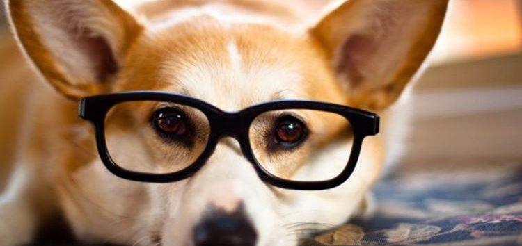 Rodrigo Donati: Visão canina