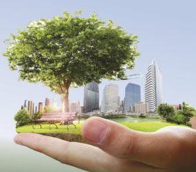 Carla Martins: Gestão Ambiental Corporativa