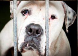 Lordello: Maus tratos aos animais e como denunciar