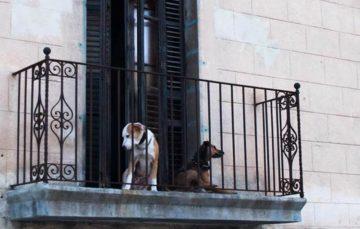 Rodrigo Donati: Cães e gatos em apartamento