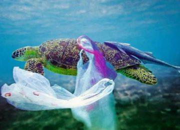 Carla Martins: O mar não está pra peixe!