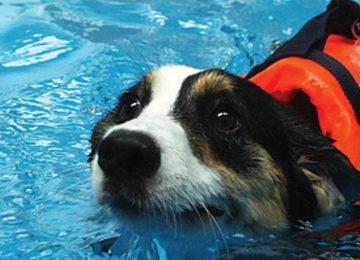 Rodrigo Donati – Terapias Alternativas: Hidroterapia