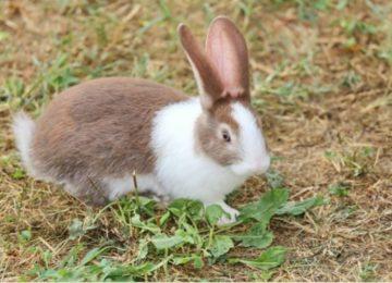 Rodrigo Donati: A higiene dos coelhos