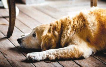 Rodrigo Donati: Alzheimer canino