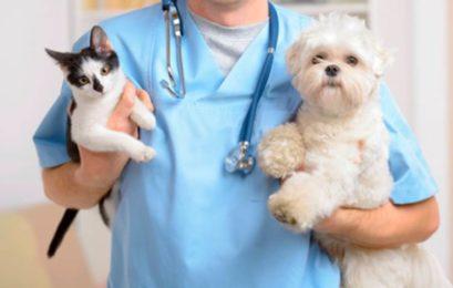 Rodrigo Donati: Exames complementares na clínica veterinária