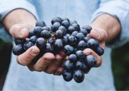 Iramaia Loiola: Uva Montepulciano, conhecem?