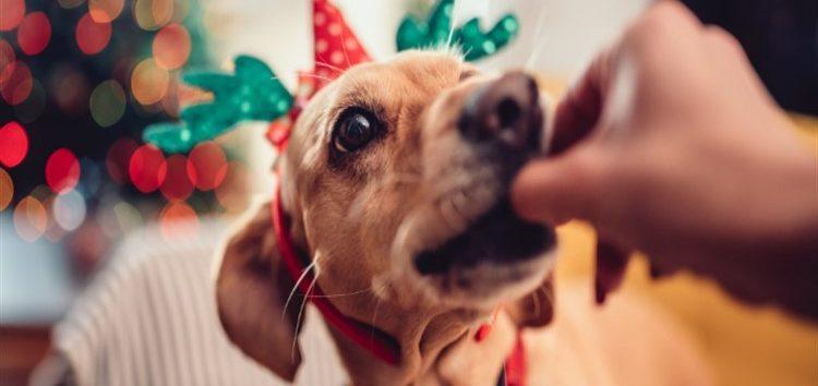 Rodrigo Donati: Perigo aos pets no fim de ano