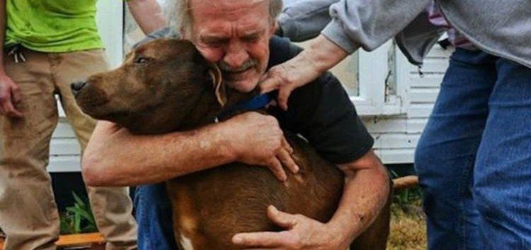 Rodrigo Donati: Memória canina
