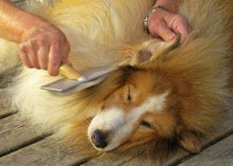Rodrigo Donati: Tudo sobre a pelagem dos nossos animais