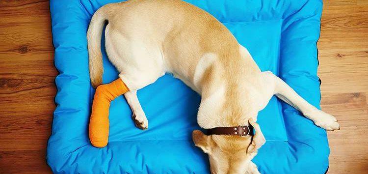 Rodrigo Donati: Luxações em cães