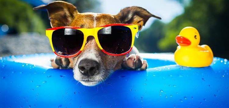Rodrigo Donati: Doenças típicas do verão em pets