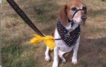 Rodrigo Donati: Fita amarela em cães