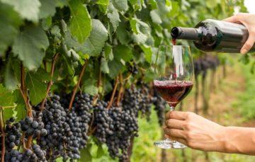 Iramaia Loiola: 10 maiores regiões produtoras do Querido Vinho