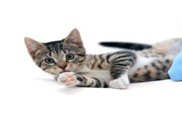 Rodrigo Donati: As sete vidas dos gatos